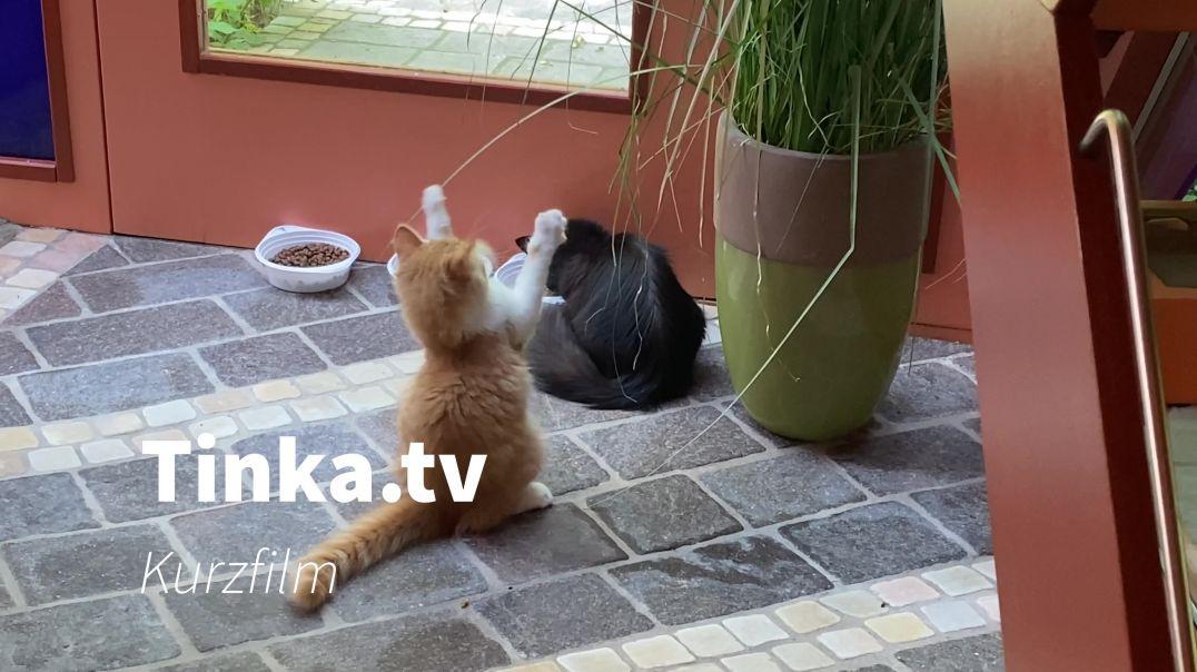 Tinka.tv Kurzfilm 06-2021